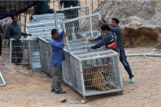 Un tigre dans une cage au temple aux tigres.