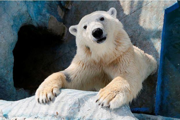Un ours au zoo de Royev Ruchey, en Russie.