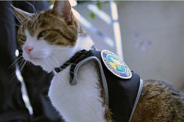 Les chats plutôt que des images des opérations de police à Munich.