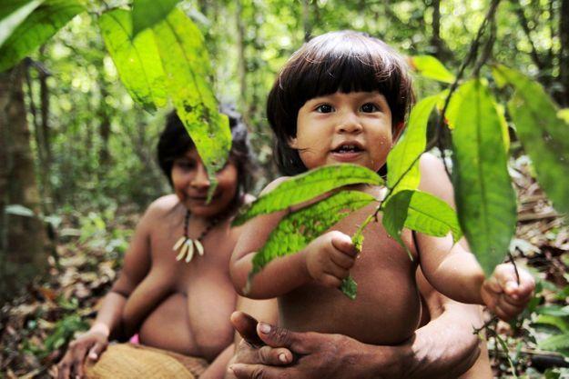 Une famille prend une pause au cours d'une promenade dans la forêt pour récolter les fruits d'açai.