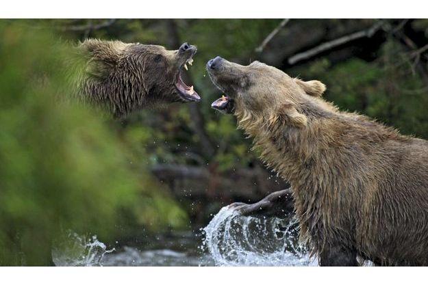 Deux jeunots se défient pour un territoire de pêche.