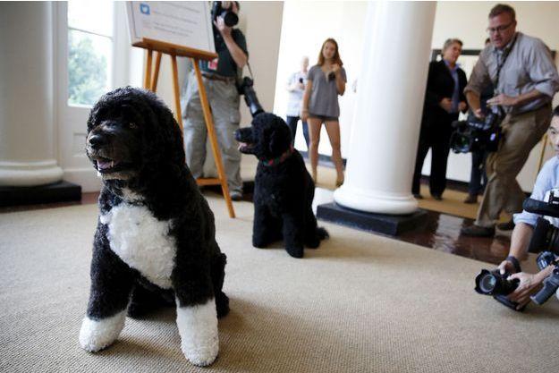 Bo et Sunny, les deux chiens des Obama, photographiés à la Maison-Blanche en juillet dernier.