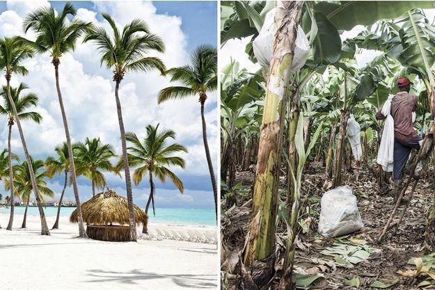 Le contraste est frappant : à gauche, les plages et les hôtels de luxe en République dominicaine. A droite, les plantations de bananes où triment les Haïtiens sous-payés.