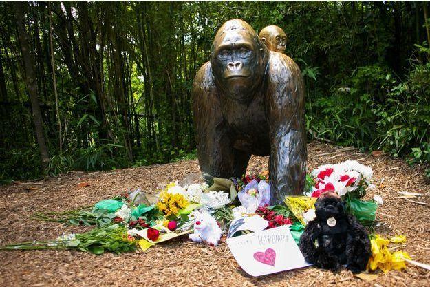 Harambe, le gorille tué pour sauver le petit garçon tombé dans son enclos, avait 17 ans.