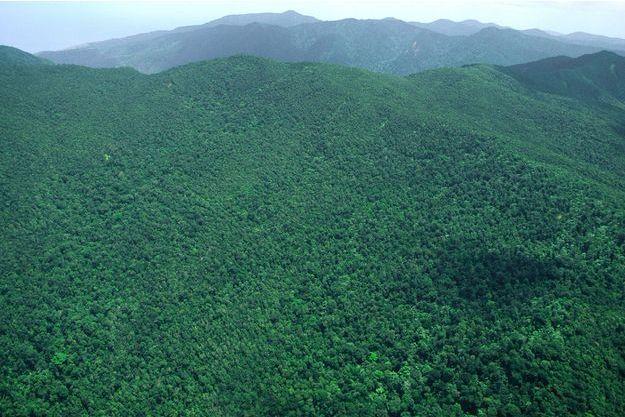 Paysage de la Basse-Terre, Guadeloupe.