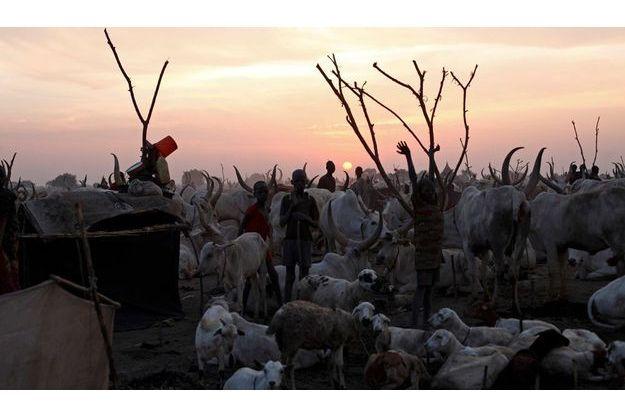 Pour ce peuple de pasteurs, la richesse s'évalue au nombre de têtes d'un troupeau. La dot des jeunes femmes se paye en bétail.