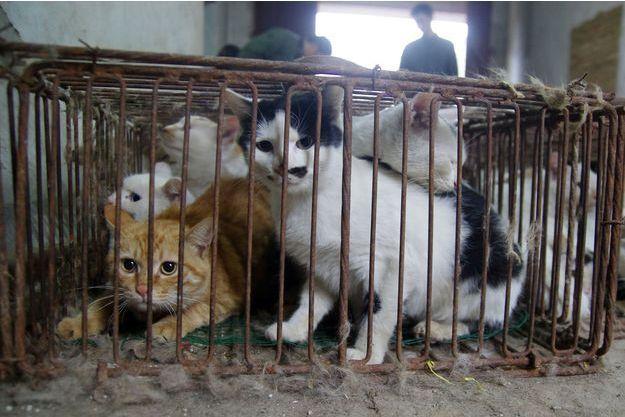 Des centaines de chats étaient enfermés dans cet abattoir illégal en Chine.