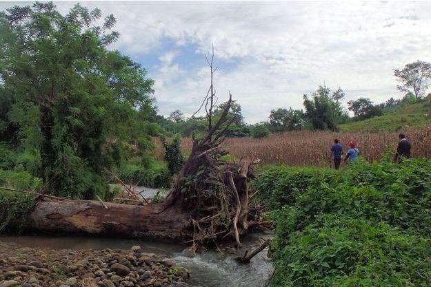 Un arbre à terre dans la Vallée de Cagayan aux Philippines.