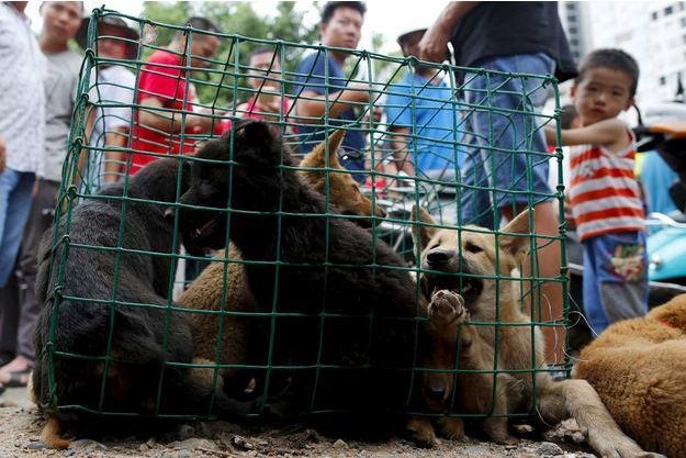 Des chiens vendus dans un marché de Yulin, à Taïwan.
