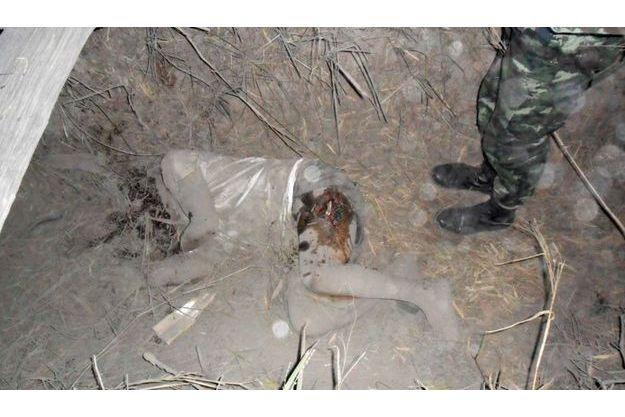 La guerre est aussi médiatique. L'armée thaïe a ainsi diffusé une photo du civil tué dans les affrontements.