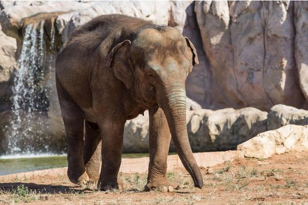 Un éléphant du zoo de Rabat.