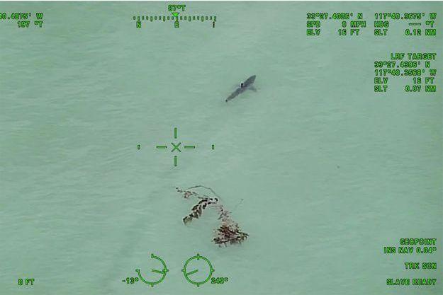 Un requin blanc observé par les les autorités du comté d'Orange.
