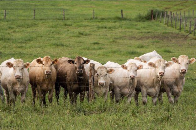 Parmi les objectifs du Parti Animaliste: renforcer la protection des animaux d'élevages et en finir avec les pratiques génératrices de souffrance.