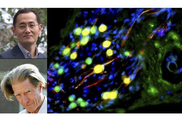 Shinya Yamanaka et John Gurdon, Prix Nobel de médecine pour leur travail sur les cellules souches.