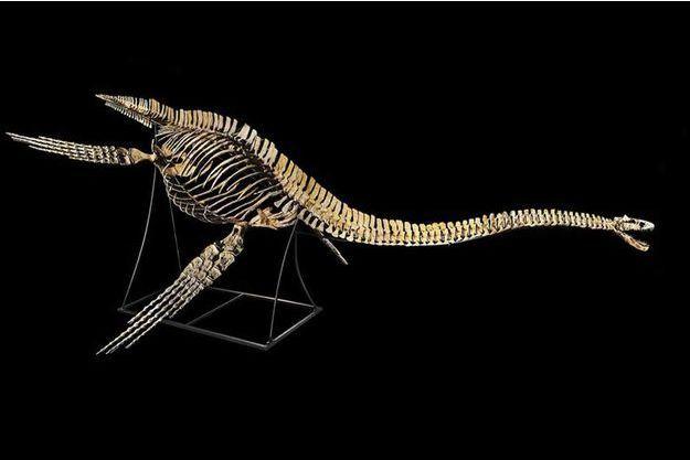 Le squelette reconstitué du Zarafosaure.