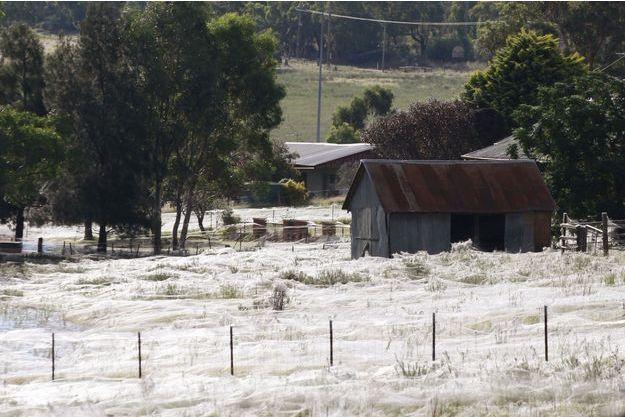 Une maison est entourée de milliers de toiles d'araignées dans la ville de Wagga Wagga, en Australie.