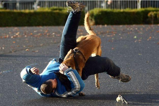 Le Raid utilise des chiens policiers pour neutraliser les terroristes. (photo d'illustration)
