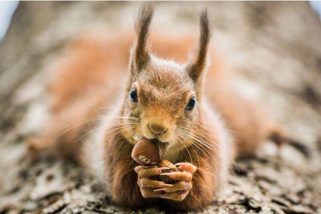 Un écureuil dans une forêt lyonnaise