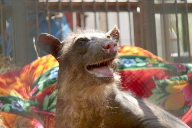Cholita l'ourse a quitté le zoo dans lequel elle vivait.
