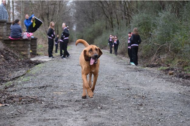 Avec son score, Ludivine la chienne est arrivée parmi les meilleurs au semi-marathon d'Elkmont, dans l'Alabama.