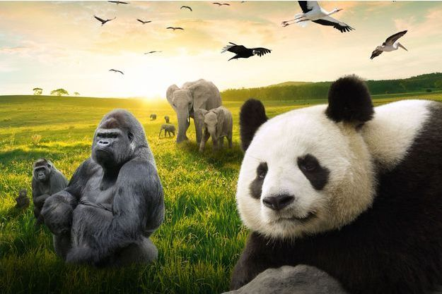 Zooparc de beauval participez notre grand jeu animal story for Appart hotel zoo de beauval