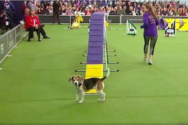 Mia, le beagle