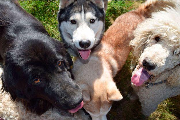 Des chiens (image d'illustration).