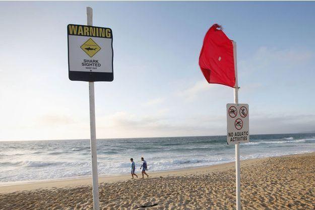 Un homme a été tué par un requin en Australie. Image d'illustration