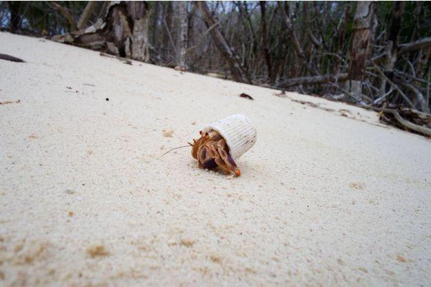 Ce bernard-l'hermite a choisi un capuchon de dentifrice en guise de coquille.