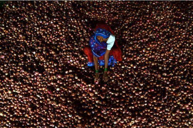 Une Indienne trie des oignons à Allahabad, en Inde.