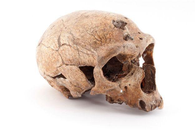 Crâne de l'homme de La Chapelle-aux-Saints (Corrèze). Son squelette est découvert par des moines en août 1908.