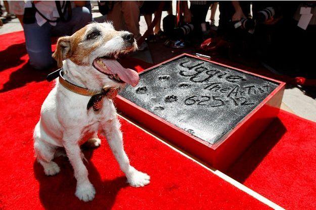 """Uggie de """"The Artist"""" marque un carré de ciment avec ses empruntes devant le Grauman's Chinese Theatre à Hollywood le 25 juin 2012."""