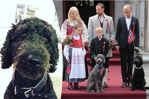 La princesse Mette-Marit et le prince Haakon de Norvège avec leurs enfants et leurs chiens le 17 mai 2014. A gauche, Muffins Kråkebolle.