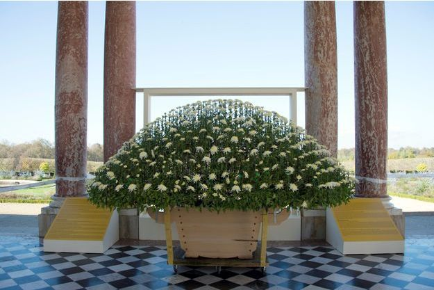 Les chrysanthèmes géants japonais trônent à Versailles jusqu'au 15 novembre.