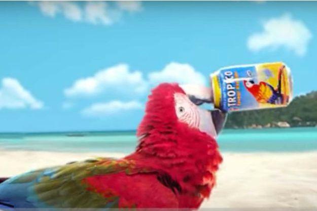 Extrait de la dernière pub pour Tropico
