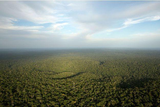 """La forêt amazonienne, le très menacé """"poumon de la planète"""""""