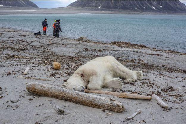 L'ours polaire abattu samedi sur l'île de Spitzberg, dans l'archipel du Svalbard.