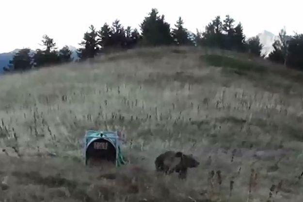 Capture d'écran d'une vidéo de l'Office national de la chasse et de la faune sauvage, lors de l'introduction d'une ourse, en octobre 2018.