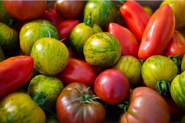 Des tomates bio cultivées en Bretagne, en septembre 2018. (photo d'illustration)