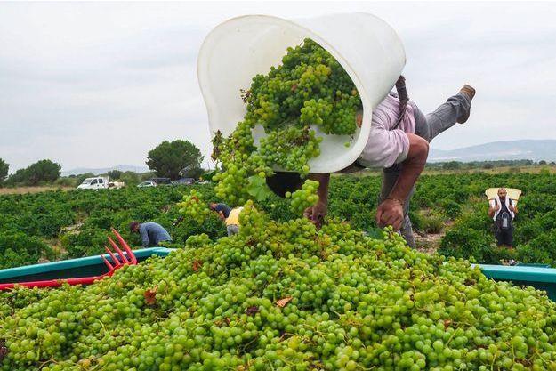 Comment s'y retrouver dans le dédale des labels du vin bio?