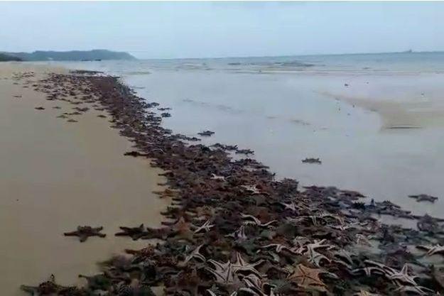 Rhett Ericsen-Miller pense que l'excès de rouille dans les eaux aurait tué les étoiles de mer.