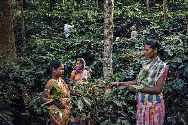 A l'ombre d'une forêt dense, des millions de caféiers ont été replantés et cultivés en symbiose avec l'environnement. Zéro produit chimique et un juste salaire ont soustrait la population à un destin funeste.