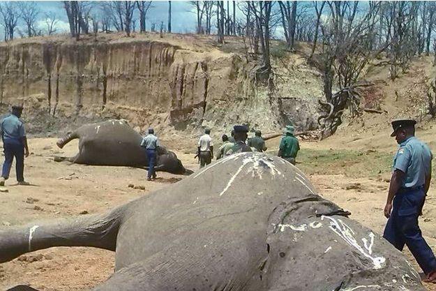 Illustration d'éléphants braconnés.