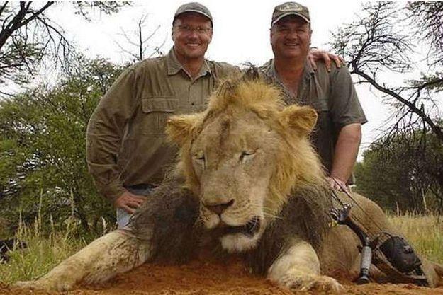 Walter Palmer, à gauche, pose fièrement avec un ami et un autre lion tué au cours d'une partie de chasse précédente.