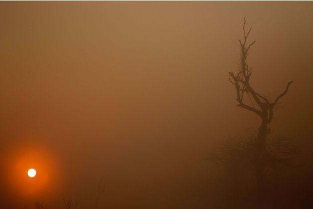 Dans les flammes de l'Amazonie, jeudi, près de Porto Velho, au Brésil.