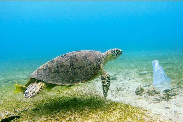 Illustration d'une tortue de mer qui nage près d'un sac plastique.