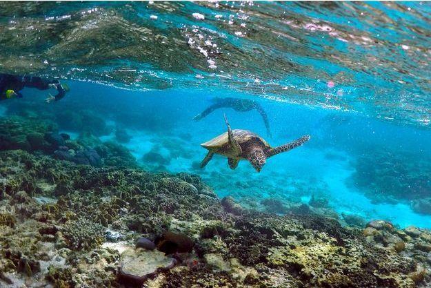 Les coraux perdent leur couleur en Australie.