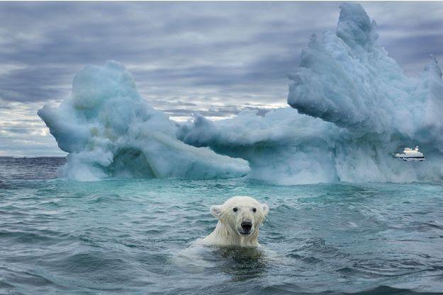 En Arctique, un ours polaire nage entre les blocs de glace
