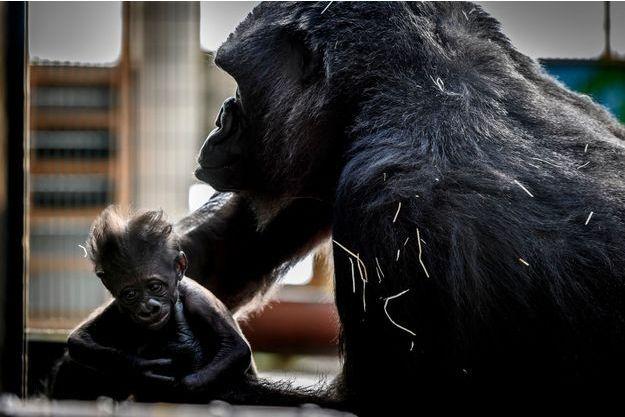 Xia et sa maman Gipsy.
