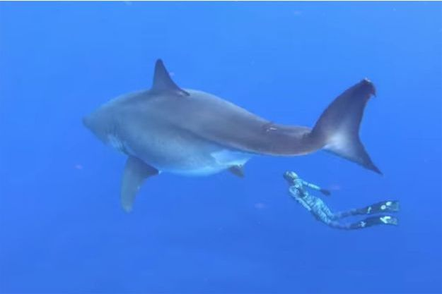 Ocean Ramsey et un requin blanc de 6,7 mètres.